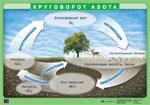Оксиды азота. Азотная кислота и ее соли