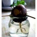 avokado-doma