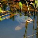 ryiba-v-prudu