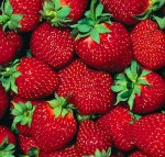 Посадка ягодных кустарников