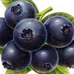 значение плодов в питании человека