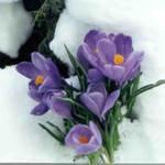 podgotovka-ogoroda-k-zime