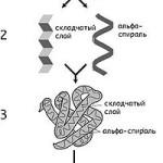 strukturyi-belkov