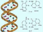 molekula-DNK