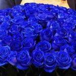 rozyi-sinie